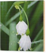 White Bells Perspective Wood Print