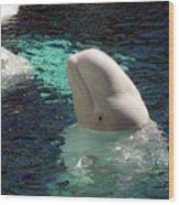 White Beluga Whale 1 Wood Print