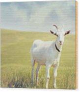 White Billy Goat Wood Print