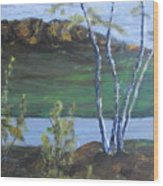 White Birch In The Landscape Wood Print