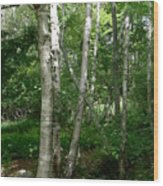 White Birch Tree Wood Print