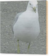 White Bird Of Alberta Wood Print