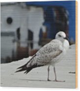 White Bird Port Burgas Wood Print
