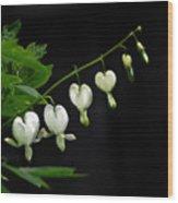 White Bleeding Hearts Wood Print