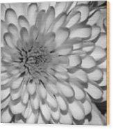 White Bloom Wood Print