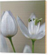 White Blossom 1 Wood Print
