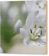 White Blossom 2 Wood Print