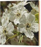 White Blossom  Wood Print