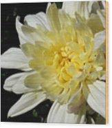 White Blossom Of Radiance Wood Print