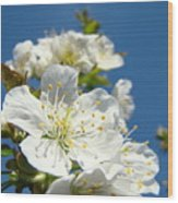 White Blossoms Art Prints Spring Tree Blossoms Canvas Baslee Troutman Wood Print