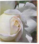 White Blush Rose Wood Print