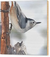 White-breasted Nuthach Wood Print