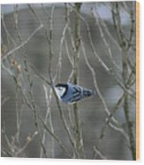 White Breasted Nuthatch 3 Wood Print