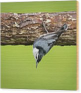 White-breasted Nuthatches Wood Print