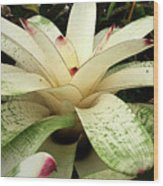 White Bromeliad Wood Print