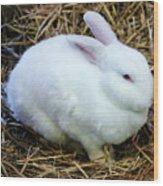 White Bunny Wood Print