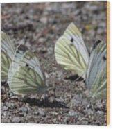 White Butterflies Wood Print