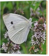 White Butterfly At The Good Earth Market Wood Print