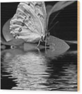 White Butterfly Bw Wood Print