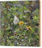 White Butterfly On Golden Daisy Wood Print