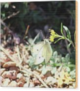 White Butterfly On Goldenseal Wood Print