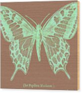 White Butterfly Swallow Tail Le Papillon Machaon Wood Print