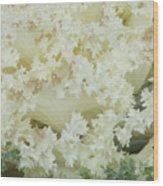White Cabbage Wood Print