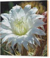 White Cactus Flower Wood Print