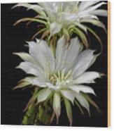 White Cactus Flowers Wood Print