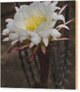 White Cactus Fower Wood Print
