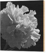 White Carnation Monochrome Wood Print