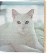 White Cat Laying On Comfy Bed Wood Print