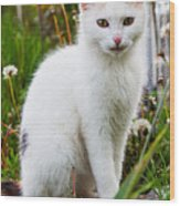 White Cat Sitting Wood Print