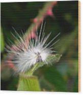 White Caterpillar  Wood Print
