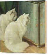 White Cats Watching Goldfish Wood Print
