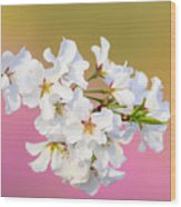 White Cherry Blossoms Against A Pink And Gold Background Wood Print