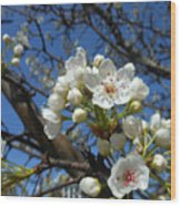White Blossoms Blooming Wood Print