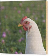 White Chicken Wood Print