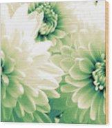 White Chrysanth Flowers Wood Print