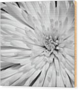 White Chrysanthemum Wood Print
