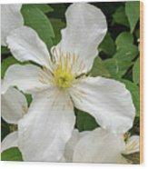 White Clematis 0808 Wood Print