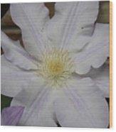 White Clematis Wood Print