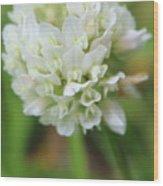 White Clover Wood Print