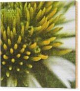 White Coneflower Wood Print