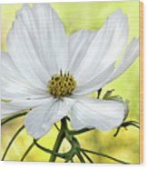 White Cosmos Floral Wood Print