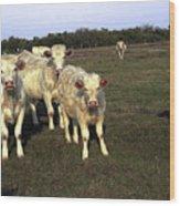 White Cows Wood Print