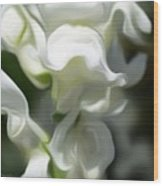 White Creamy Peaceful Wood Print