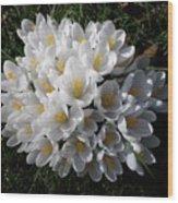 White Crocuses Wood Print