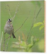 White Crown Sparrow Wood Print