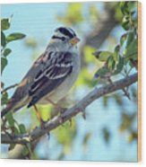 White-crowned Sparrow 0033-111017-1cr Wood Print